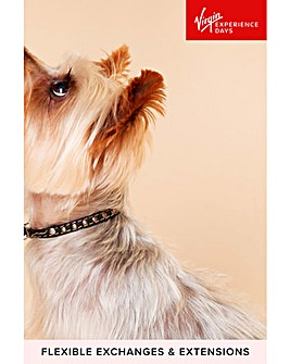 Pet Photoshoot with �50 off Voucher