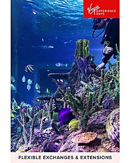 Dive with Sharks at Skegness Aquarium