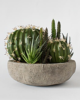 Cactus Garden in Stone Effect Container