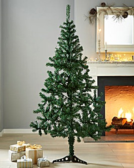 Cedar Pine Tree