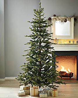 Bayern Pine Tree