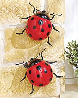 Jumbo Ladybirds Pack of 2
