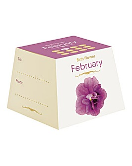Birth Flowers February