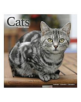 Cats 2020 Calendar