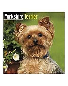 Yorkshire Terrier 2020 Dog Calendar