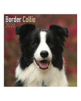 Border 2020 Dog Collie