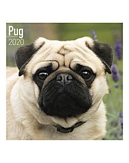 Pug 2020 Dog Calendar