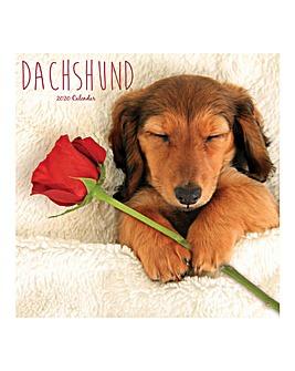 Dachshund 2020 Dog Calendar