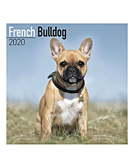 French Bulldog 2020 Dog Calendar