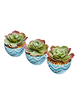 Set of 3 Succulents in Hand Painted Pots