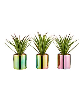 Set of 3 Succulents in Iridescent Pots