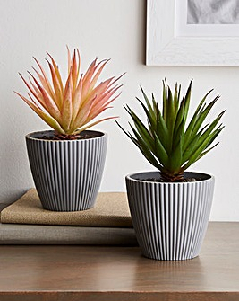 Set of 2 Artificial Succulents