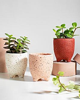 Sass & Belle Set of Mini Planters