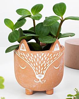 Sass & Belle Fox Planter