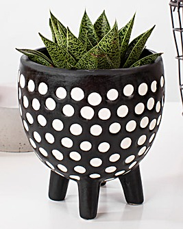Sass & Belle Spotted Planter on Legs
