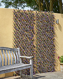 Vivid Violet Trellis 180 x 90 cm