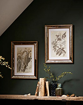 Set of 2 Botanical Studies Framed Prints
