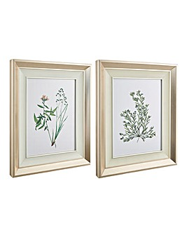 Set of 2 Spring Botanical Framed Prints