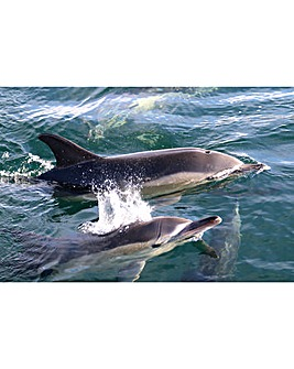 Dolphin & Whale Watching For Two