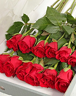 12 Red Letter Box Roses