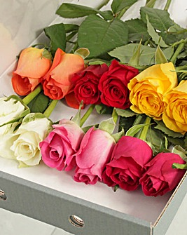 12 Colourful Letter Box Roses
