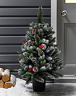 Potted New Jersey Spruce Tree