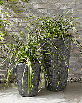 Set of 2 Grey Rattan Planters